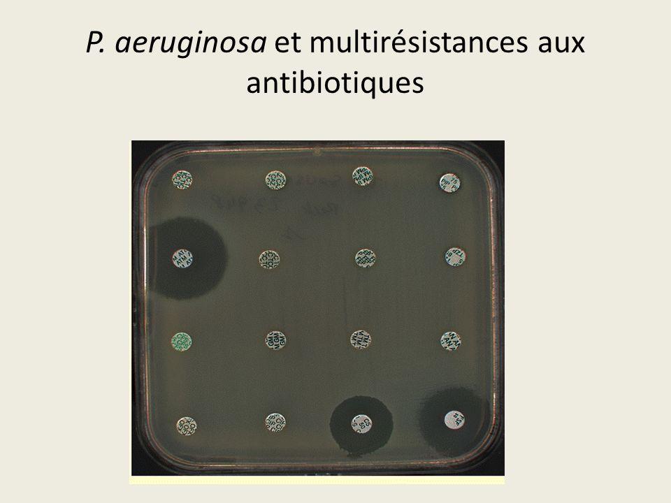 P. aeruginosa et multirésistances aux antibiotiques