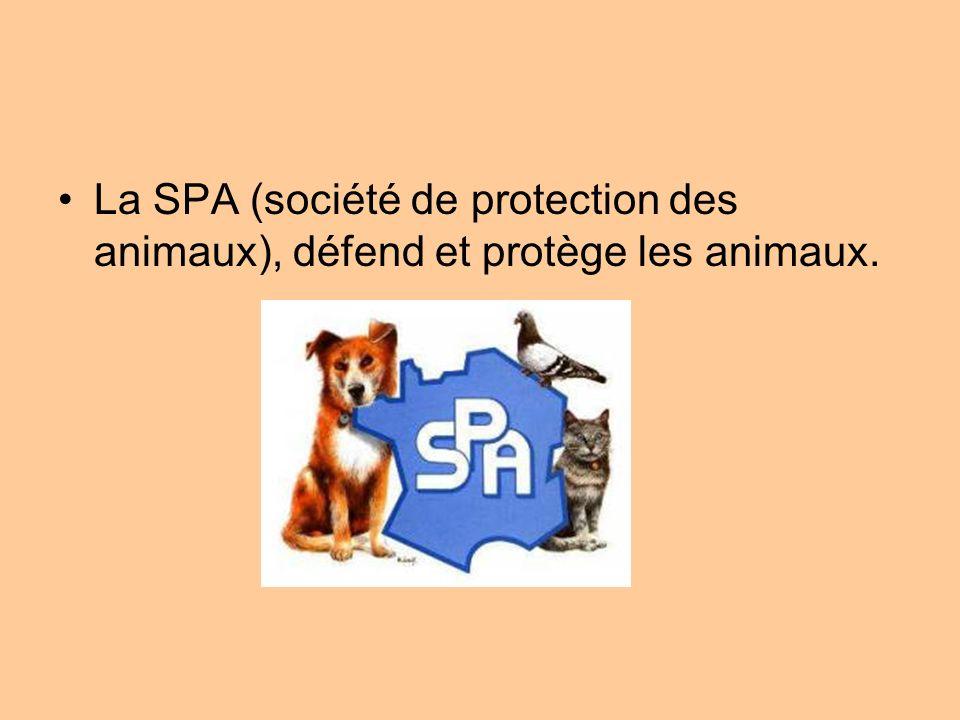 La SPA (société de protection des animaux), défend et protège les animaux.