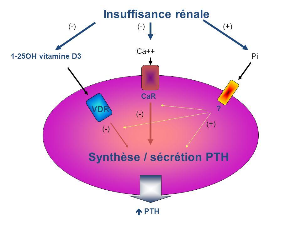 Synthèse / sécrétion PTH