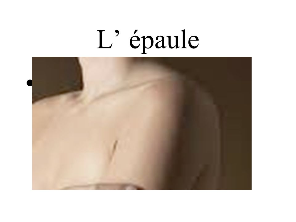 L' épaule shoulder