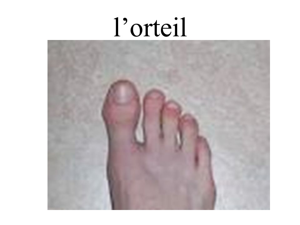 l'orteil