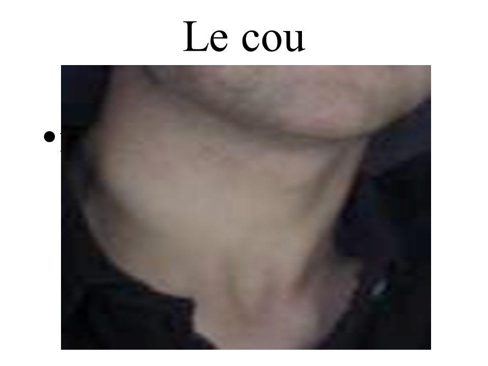 Le cou neck