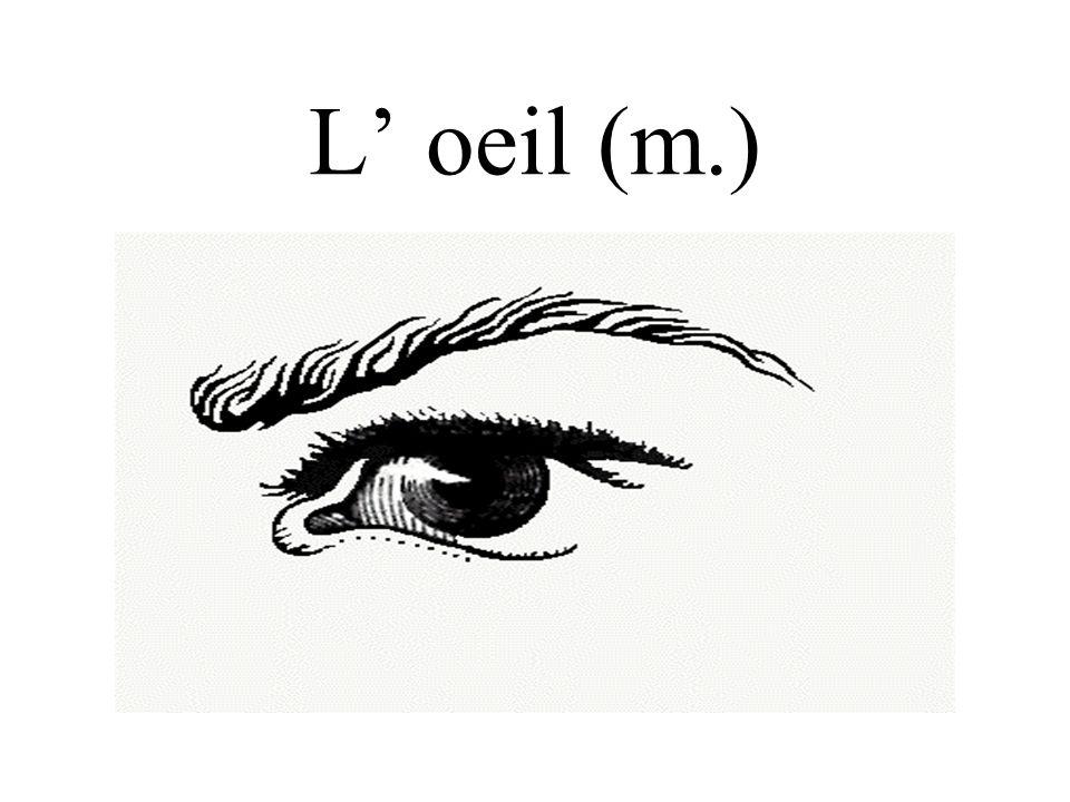L' oeil (m.)