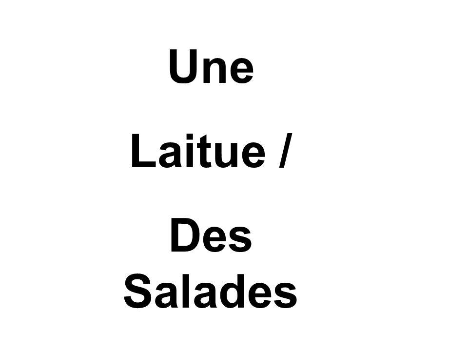 Une Laitue / Des Salades