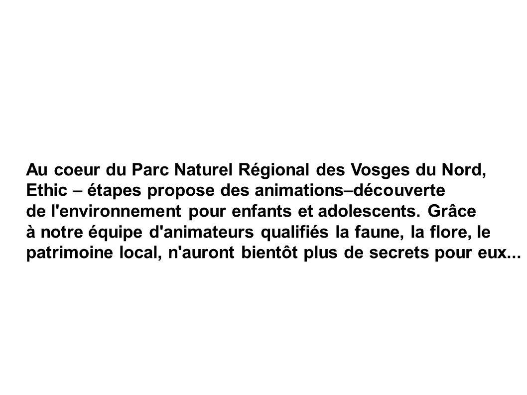 Au coeur du Parc Naturel Régional des Vosges du Nord,