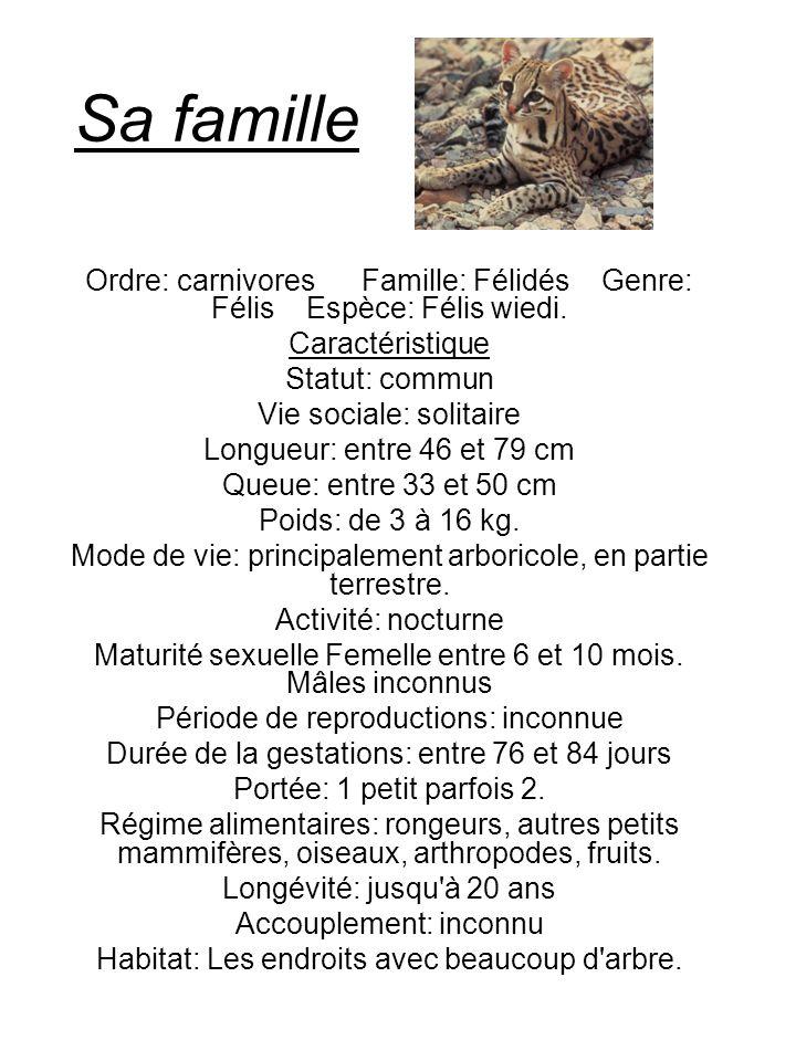 Sa familleOrdre: carnivores Famille: Félidés Genre: Félis Espèce: Félis wiedi. Caractéristique.