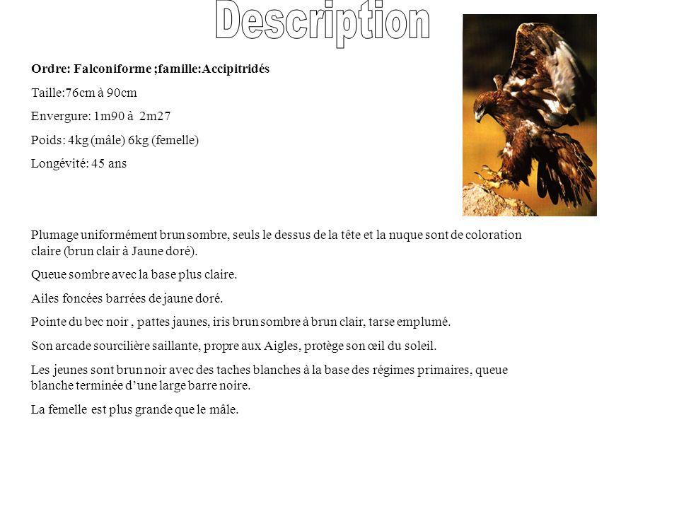 Description Ordre: Falconiforme ;famille:Accipitridés