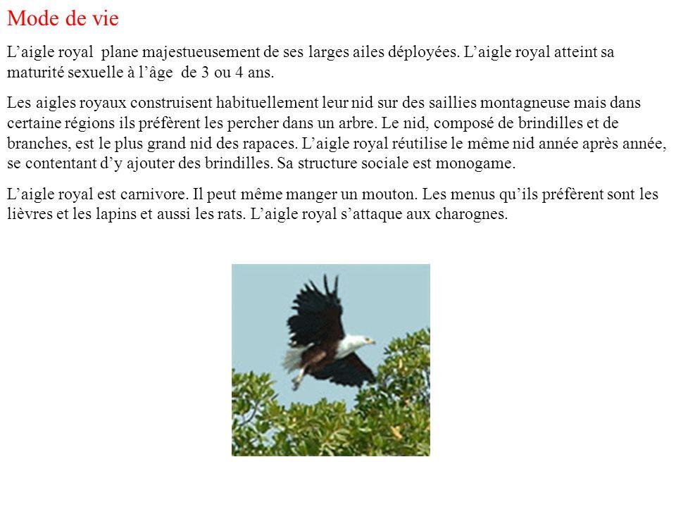 Mode de vie L'aigle royal plane majestueusement de ses larges ailes déployées. L'aigle royal atteint sa maturité sexuelle à l'âge de 3 ou 4 ans.
