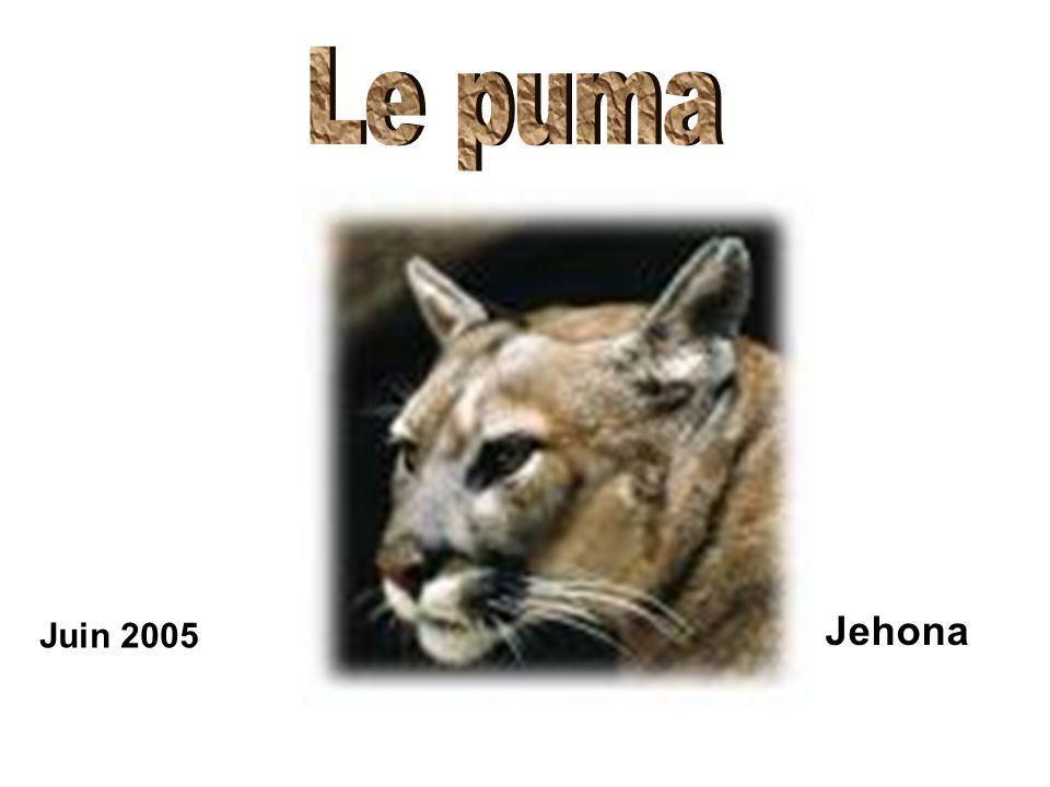 Le puma Jehona Juin 2005