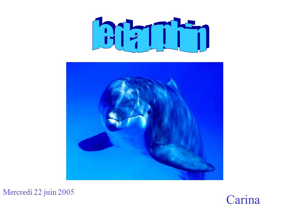 le dauphin Mercredi 22 juin 2005 Carina
