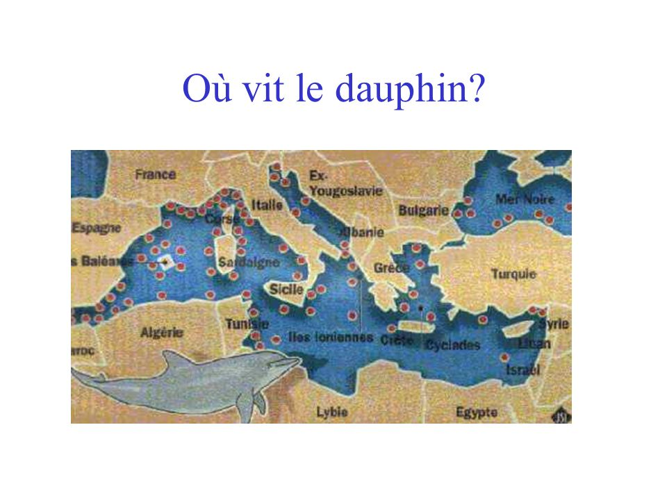 Où vit le dauphin