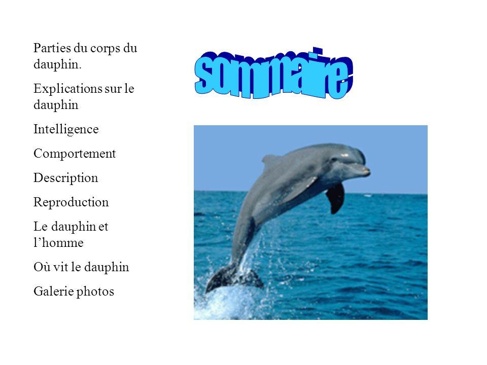 sommaire Parties du corps du dauphin. Explications sur le dauphin