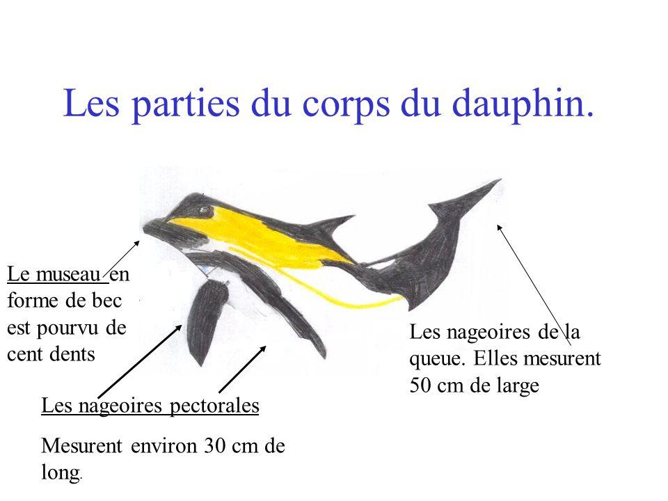 Les parties du corps du dauphin.