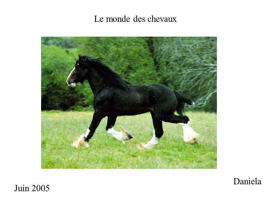 Le monde des chevaux Daniela Juin 2005