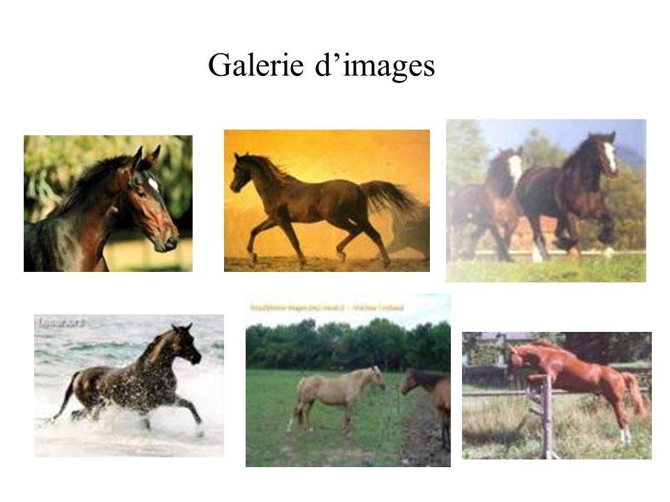 Galerie d'images