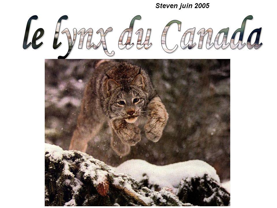 Steven juin 2005 le lynx du Canada