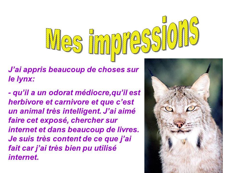 Mes impressions J'ai appris beaucoup de choses sur le lynx: