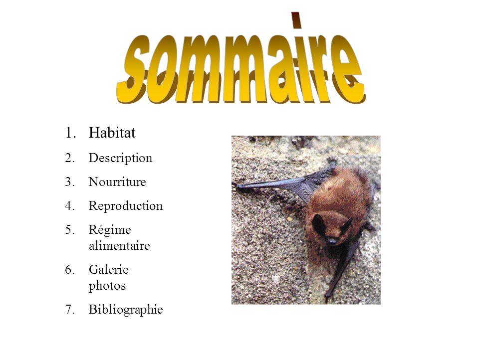 sommaire Habitat Description Nourriture Reproduction