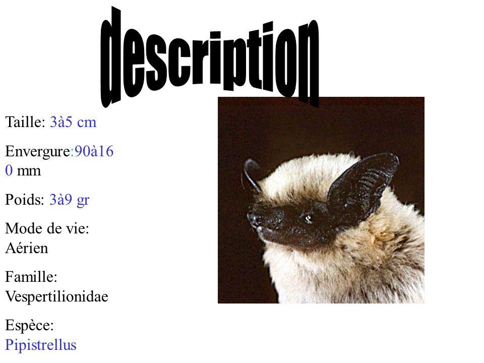 description Taille: 3à5 cm Envergure:90à160 mm Poids: 3à9 gr