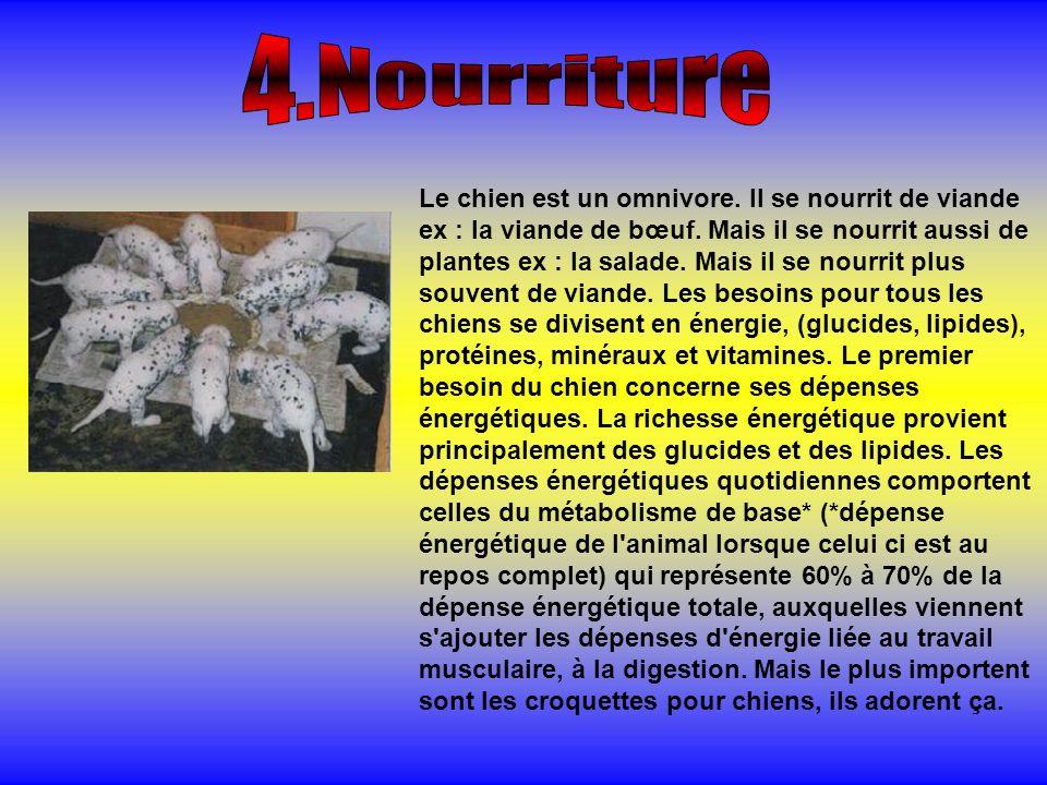 4.Nourriture