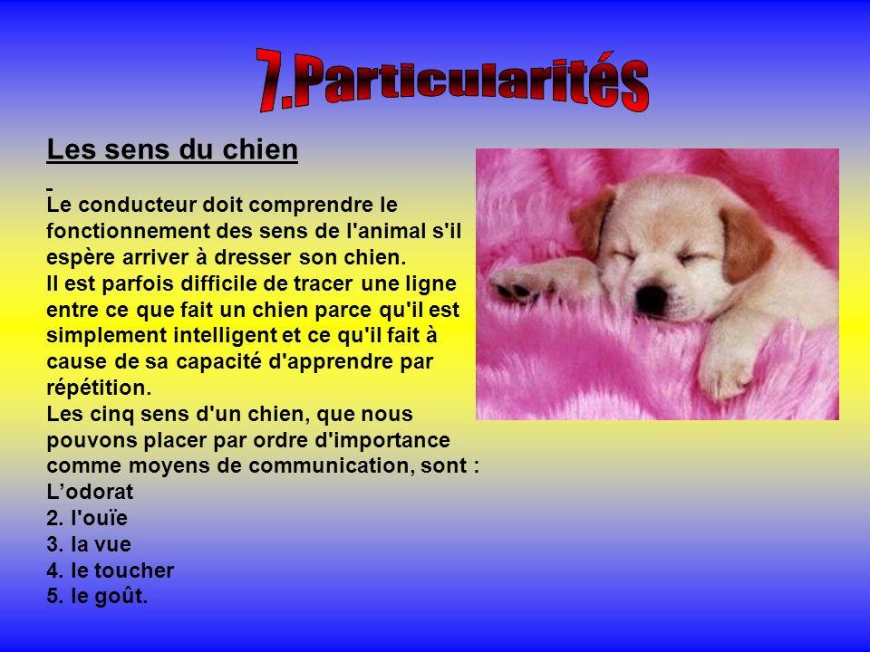7.Particularités Les sens du chien