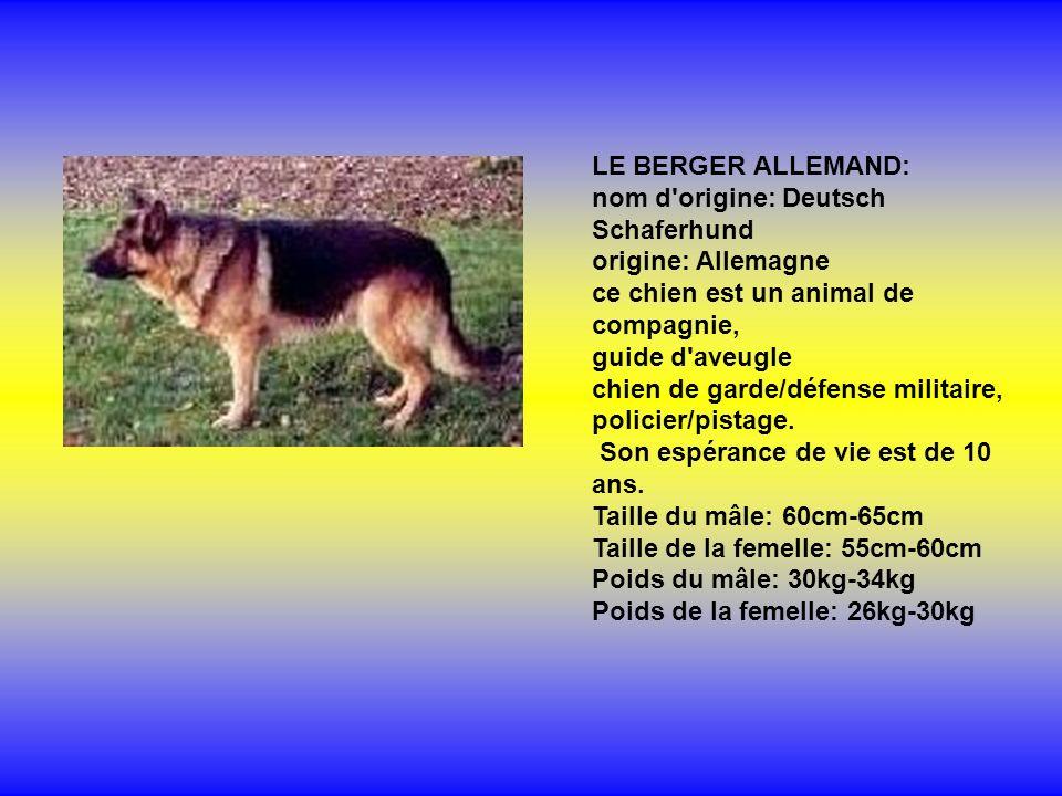 LE BERGER ALLEMAND: nom d origine: Deutsch Schaferhund origine: Allemagne ce chien est un animal de compagnie,