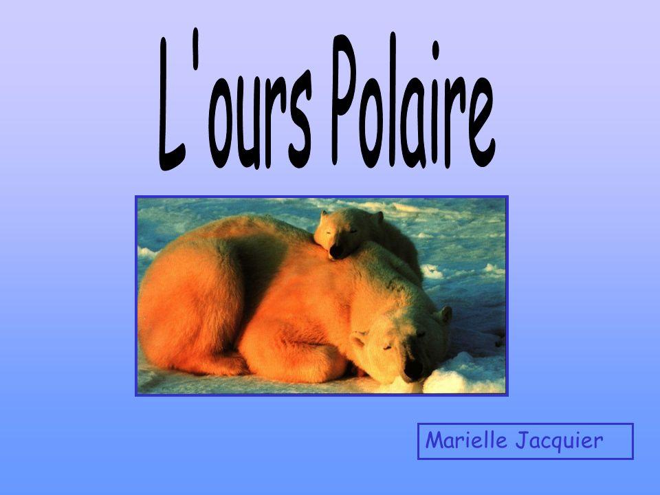 L ours Polaire Marielle Jacquier