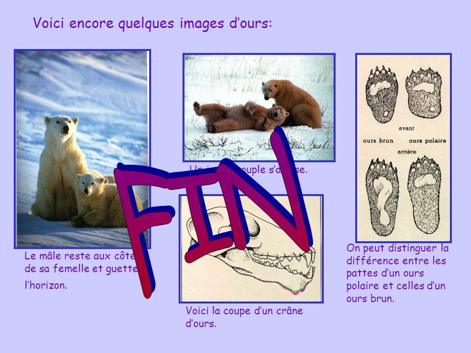 FIN Voici encore quelques images d'ours: Un jeune couple s'amuse.