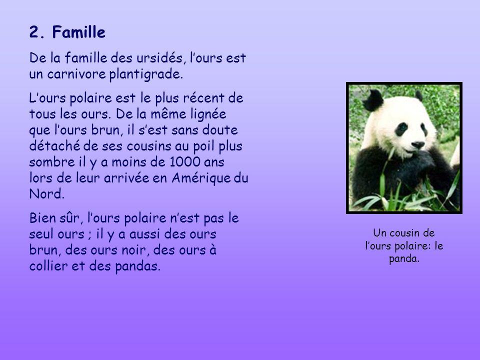 Un cousin de l'ours polaire: le panda.