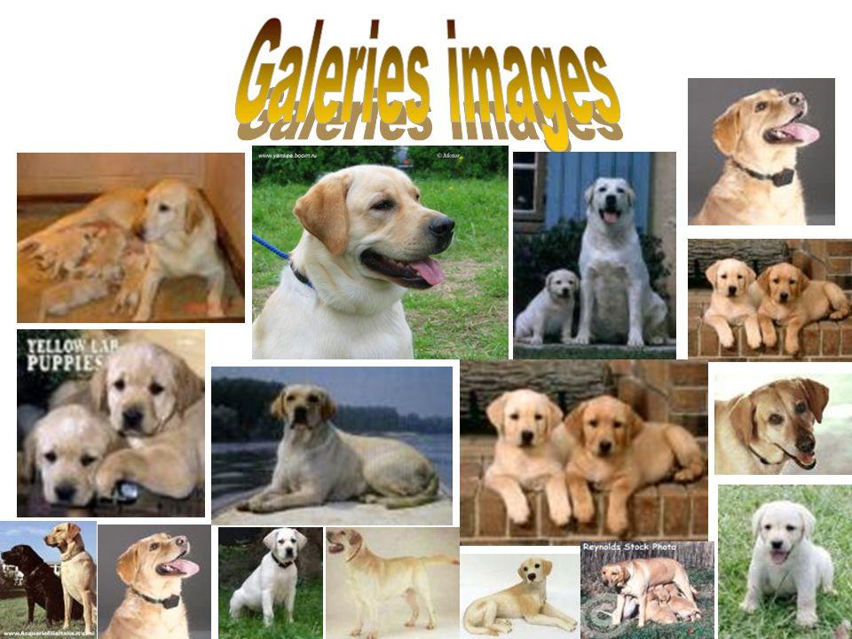 Galeries images