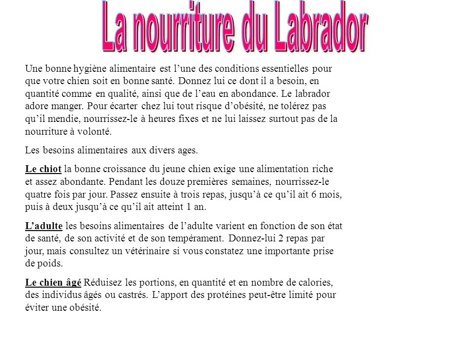 La nourriture du Labrador