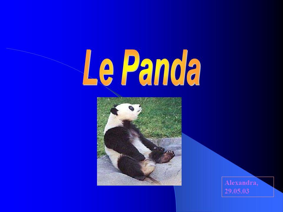 Le Panda Alexandra, 29.05.03