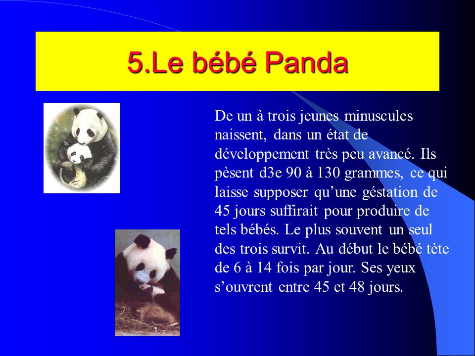 5.Le bébé Panda