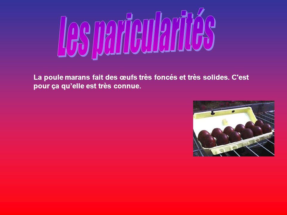 Les paricularités La poule marans fait des œufs très foncés et très solides.