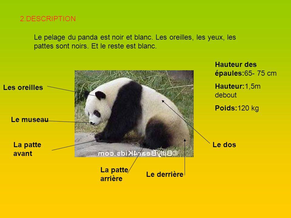 2.DESCRIPTION Le pelage du panda est noir et blanc. Les oreilles, les yeux, les pattes sont noirs. Et le reste est blanc.