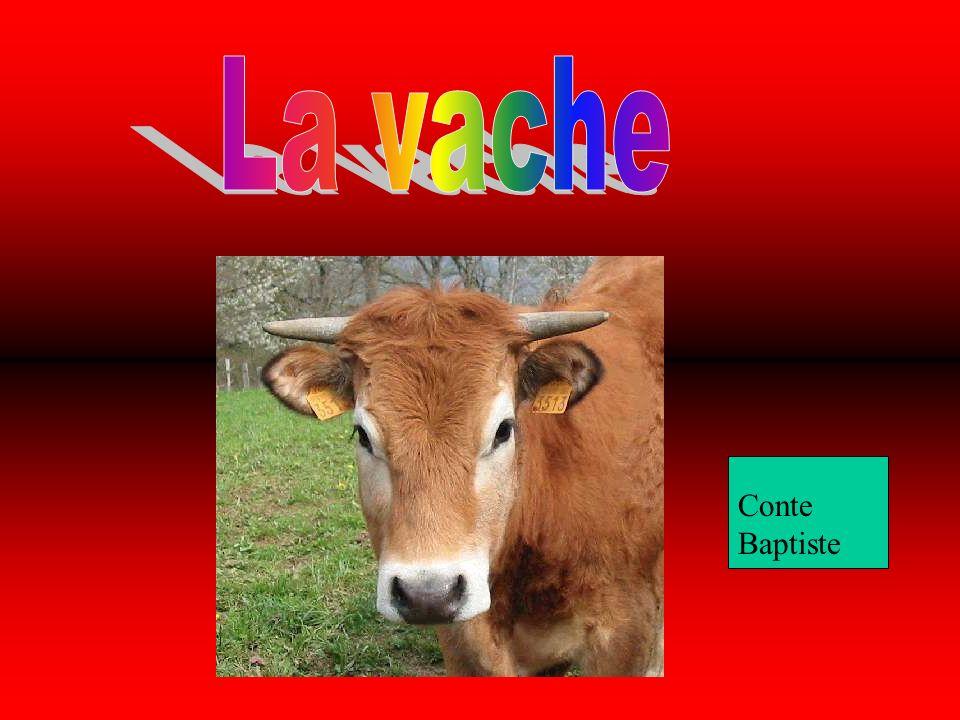 La vache Conte baptiste Conte Baptiste