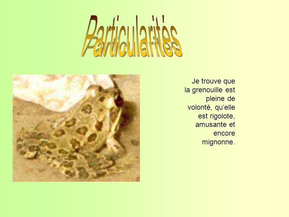 Particularités Je trouve que la grenouille est pleine de volonté, qu'elle est rigolote, amusante et encore mignonne.