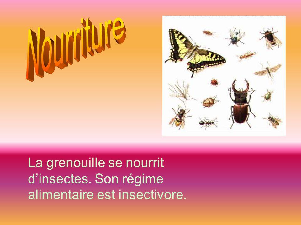 Nourriture La grenouille se nourrit d'insectes. Son régime alimentaire est insectivore.