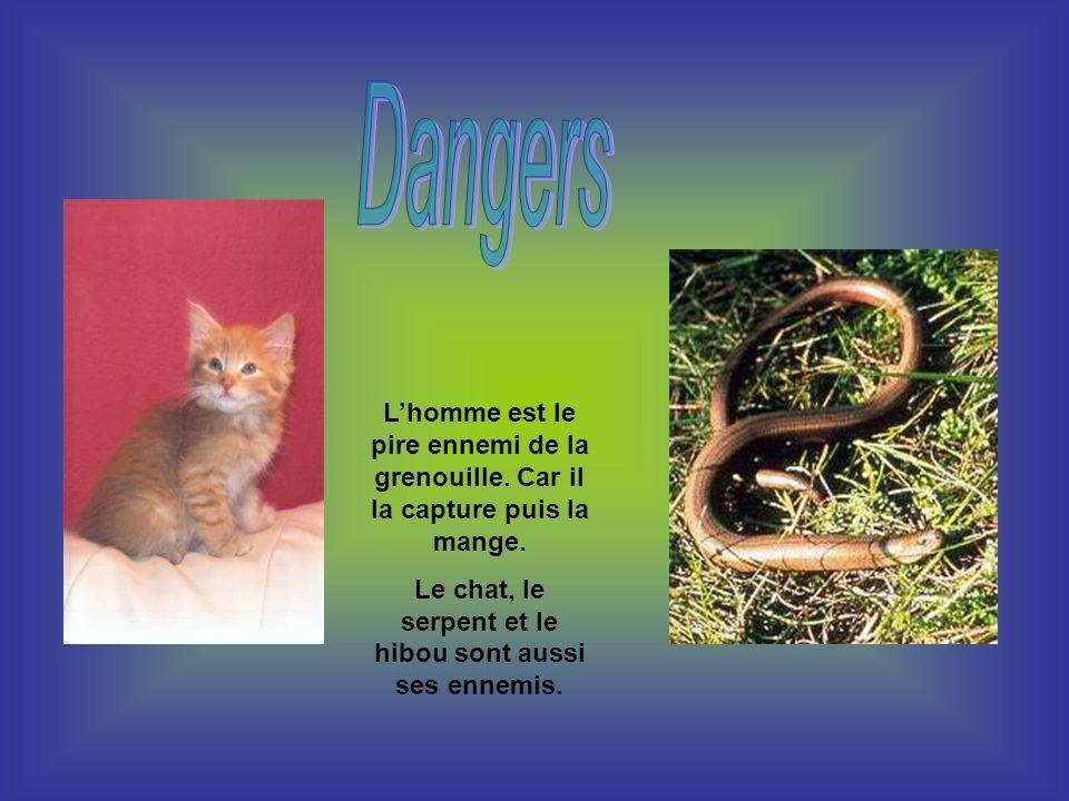 Le chat, le serpent et le hibou sont aussi ses ennemis.