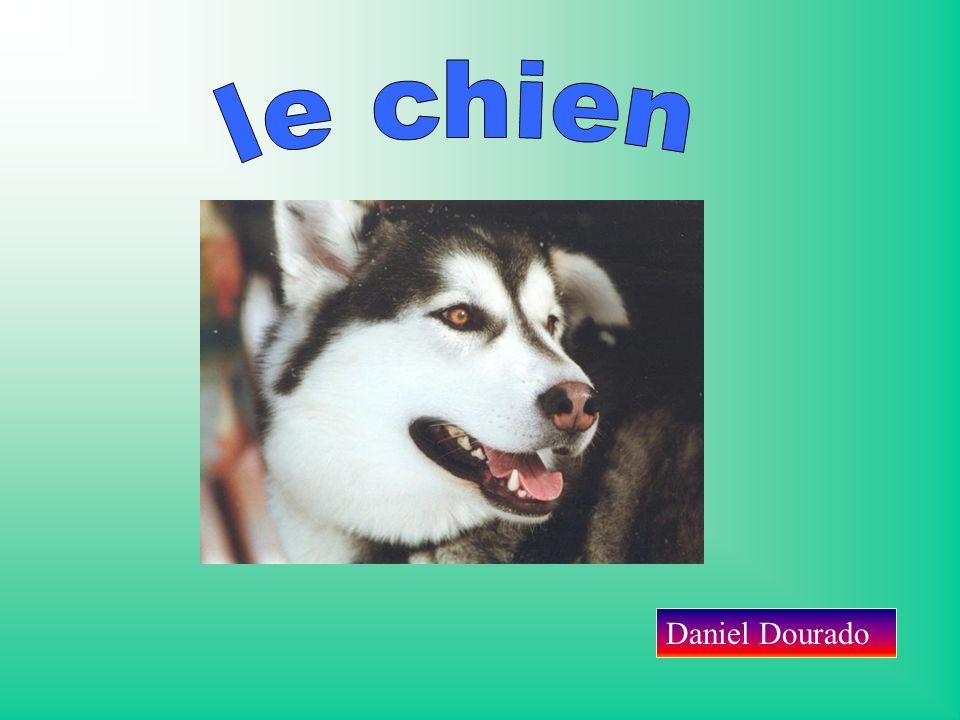 le chien Daniel Dourado