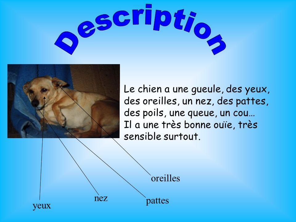 Description Le chien a une gueule, des yeux, des oreilles, un nez, des pattes, des poils, une queue, un cou…