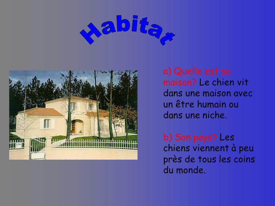 Habitat a) Quelle est sa maison Le chien vit dans une maison avec un être humain ou dans une niche.
