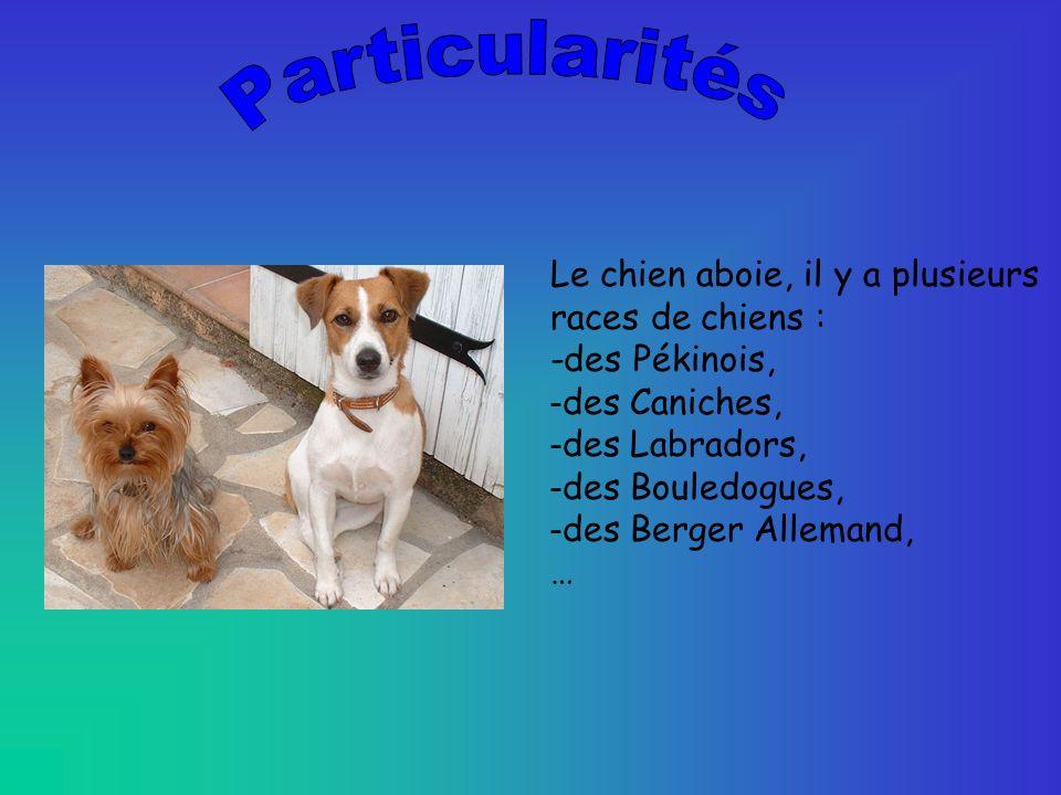 Particularités Le chien aboie, il y a plusieurs races de chiens :