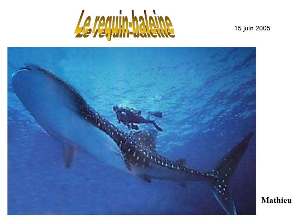Le requin-baleine 15 juin 2005 Mathieu