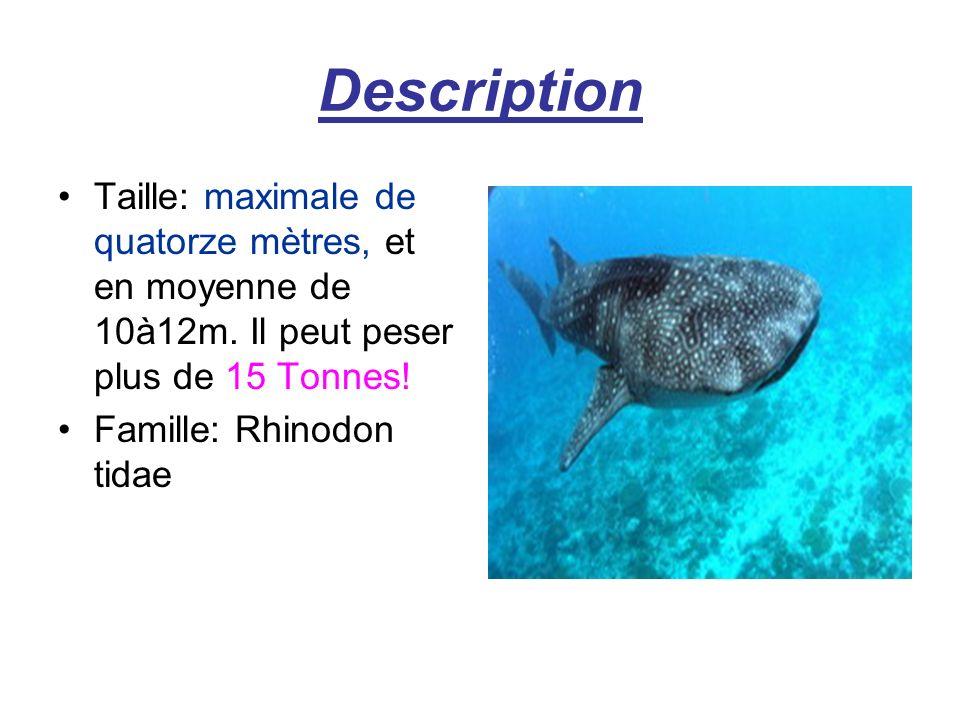 Description Taille: maximale de quatorze mètres, et en moyenne de 10à12m. Il peut peser plus de 15 Tonnes!
