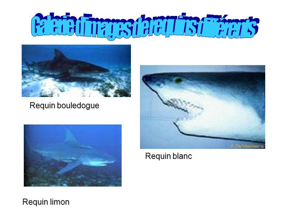 Galerie d'images de requins différents