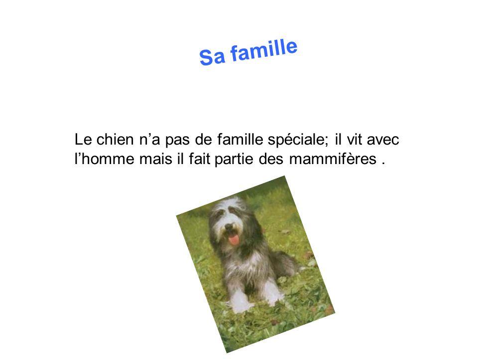 Sa famille Le chien n'a pas de famille spéciale; il vit avec l'homme mais il fait partie des mammifères .