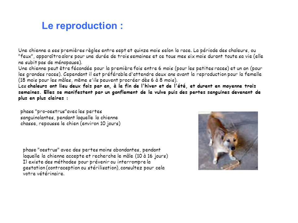 Le reproduction :