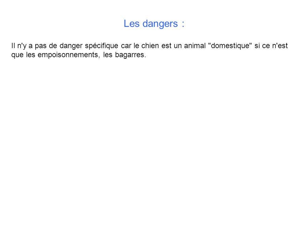 Les dangers : Il n y a pas de danger spécifique car le chien est un animal domestique si ce n est que les empoisonnements, les bagarres.