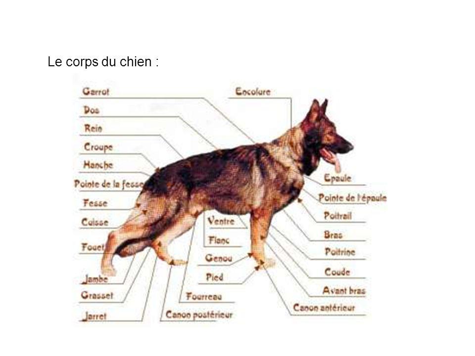 Le corps du chien :
